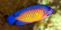Featured Marine Fish