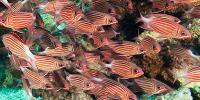 Miscellaneous Marine Fish